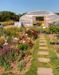 A photo of the sunny nursery in bloom